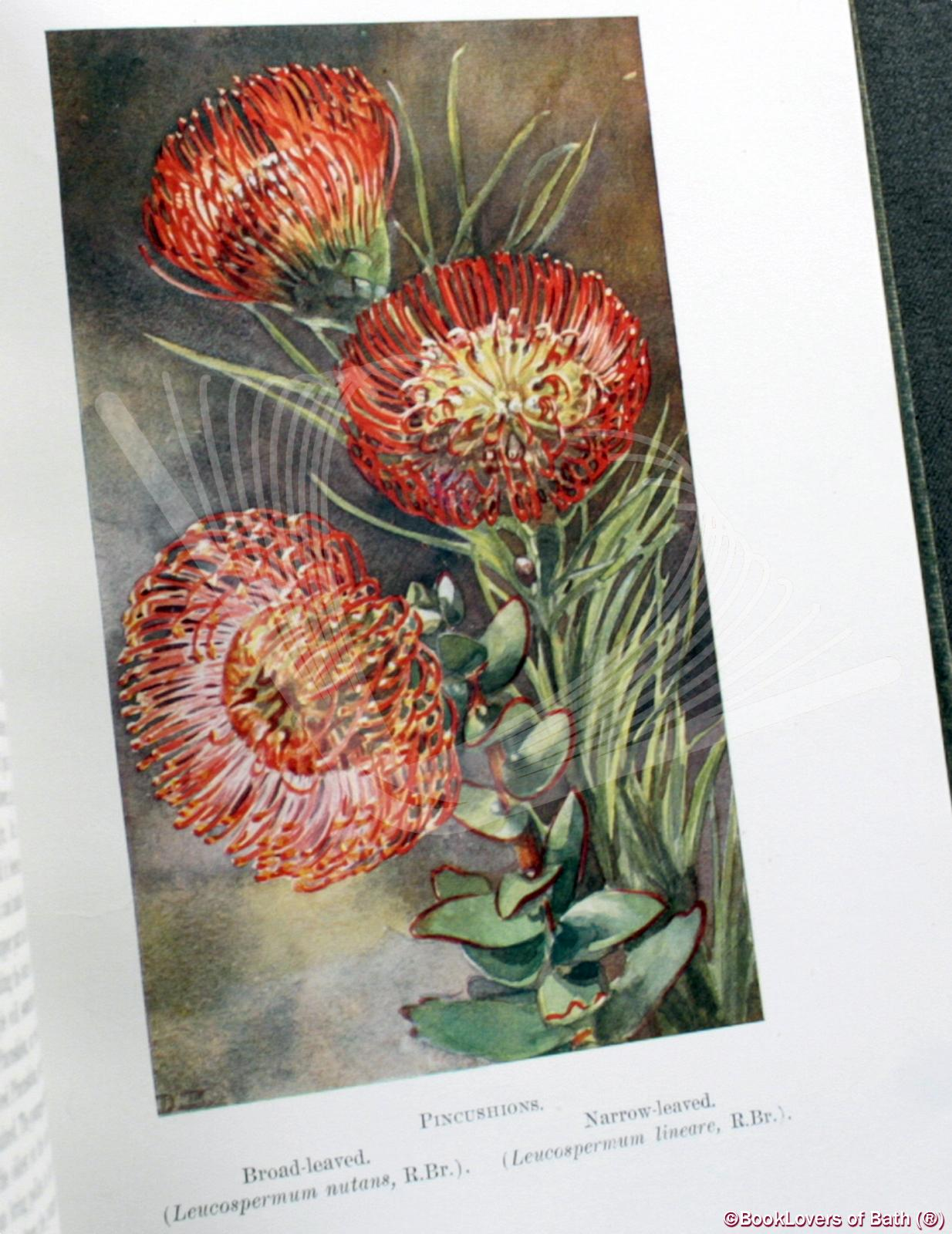 A First Book of South African Flowers (Issued Under the Auspices of the Wild Flower Protection Society) - H. M. L. [Harriet Margaret Louisa] Bolus